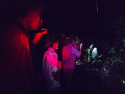 Exploring La Ceiba Reserve by night you will discover many hidden mysteries. Photo by Barry Hovland