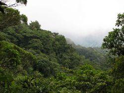 Santa Elena Reserve view