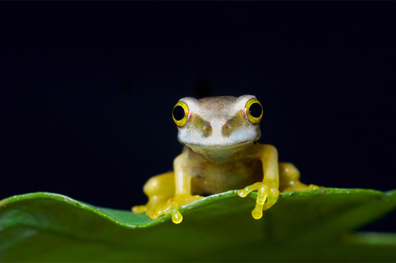 cute frog in costa rica