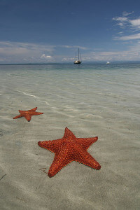starfish in bocas