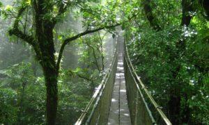 Hanging Bridge Plan Trip CR