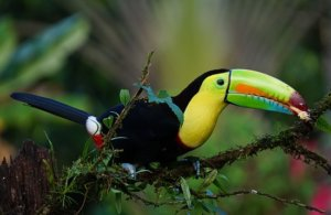 Why Visit Costa Rica?